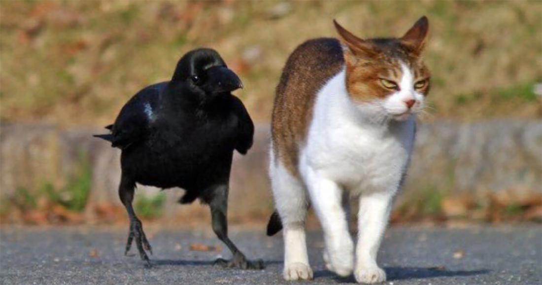 492c826006ae Φωτογραφία που διχάζει  Είναι κοράκι ή γάτα  Εσεις τι βλέπετε ...