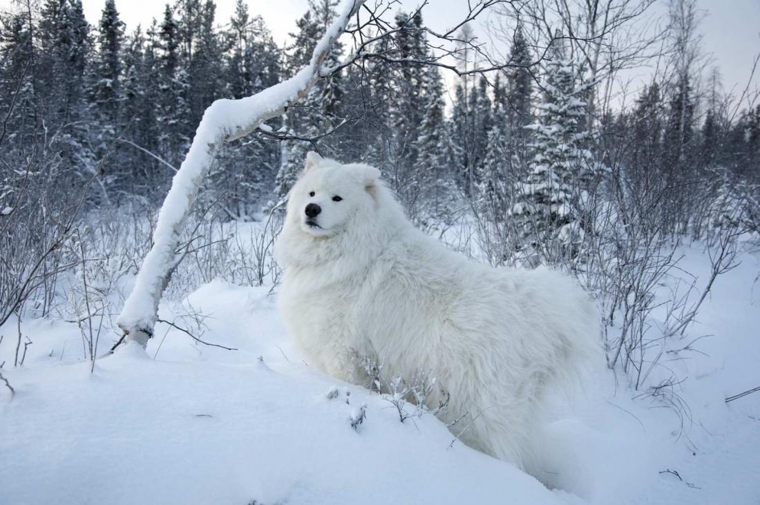 ea8242e7d231 Σκύλος στο κρύο και στο χιόνι  Δείτε πώς να τον προστατεύσετε ...