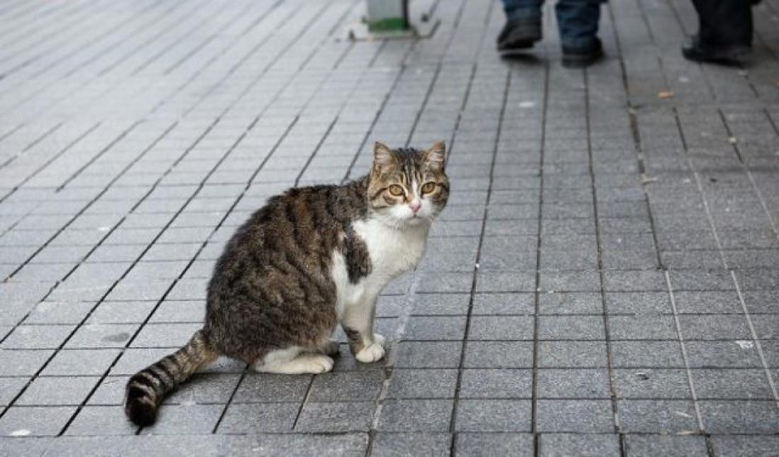 2855a828a887 Σοκ! Εξαφανίζονται οι γάτες στη Θεσσαλονίκη-Δείτε γιατί