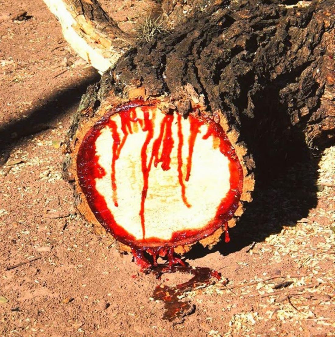 Το θαύμα στην Θεσσαλία με το ματωμένο δέντρο του Αγ. Νικολάου (ΦΩΤΟ-ΒΙΝΤΕΟ)  | ΕΛΛΑΔΑ | thepressroom.gr