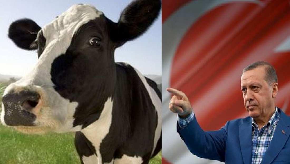 """""""Απέλασαν"""" μέχρι και τις... ολλανδικές αγελάδες οι Τούρκοι!"""
