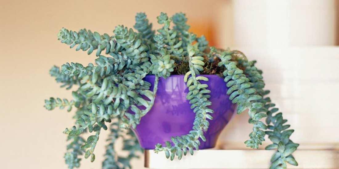 Παράξενα φυτά και που θα τα βρείτε