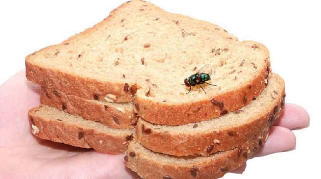 Τι επικίνδυνο συμβαίνει όταν μια μύγα προσγειώνεται στο φαγητό μας
