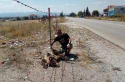 Θεσσαλονίκη: Ακόμη μία αρκούδα νεκρή σε τροχαίο