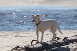 Αυτές είναι οι Pet Friendly παραλίες