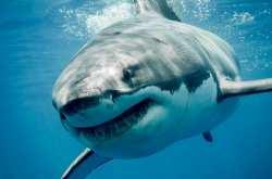 Ποια θέση κατέχει η χώρα μας στις επιθέσεις καρχαριών από το 1900 (ΧΑΡΤΗΣ)