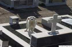 Σκυλίτσα στέκεται στον τάφο του αφεντικού της στην Άρτα επί δύο μήνες (ΦΩΤΟ)