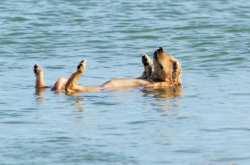 Παραλίες φιλικές για σκύλους στον Δήμο Θερμαϊκού