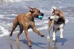 Επιτρέπονται οι σκύλοι στις παραλίες; Δες τι ισχύει νομικά στην Ελλάδα