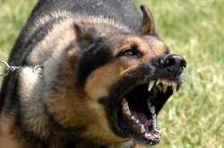 Εκτός ΜΕΘ ο 31χρονος που δέχθηκε επίθεση από σκύλο