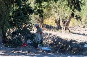Ξανά στο δέντρο οι έρευνες για τον Μπεν και σε έναν βόθρο μετά την ανακάλυψη των αρχαίων τάφων