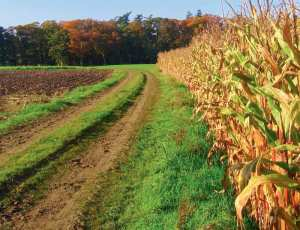 Νέο νομοσχέδιο στο παρά πέντε για τα αγροτεμάχια
