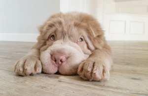 11 πράγματα που μπορεί να μυρίσει ο σκύλος σου αλλά εσύ όχι!