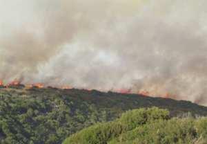 Ιωάννινα: Συναγερμός από ανεξέλεγκτη φωτιά κοντά στην Πανεπιστημιούπολη