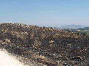 Ξεκίνησε εδώ και λίγες ώρες η διαδικασία της «επόμενης μέρας» για τις μεγάλες πυρκαγιές, κυρίως της βορειοανατολικής Αττικής και της Ζακύνθου