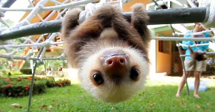 Η καταπληκτική συζήτηση ανάμεσα σε δύο baby sloth