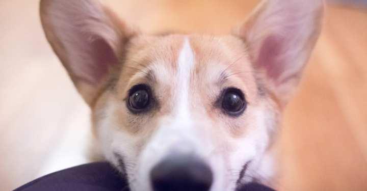 Οι σκύλοι κάνουν μονόζυγο;
