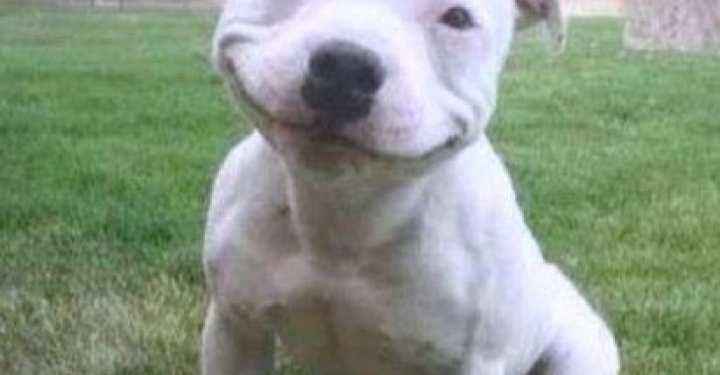 Χαρούμενη Παγκόσμια μέρα σκύλων!