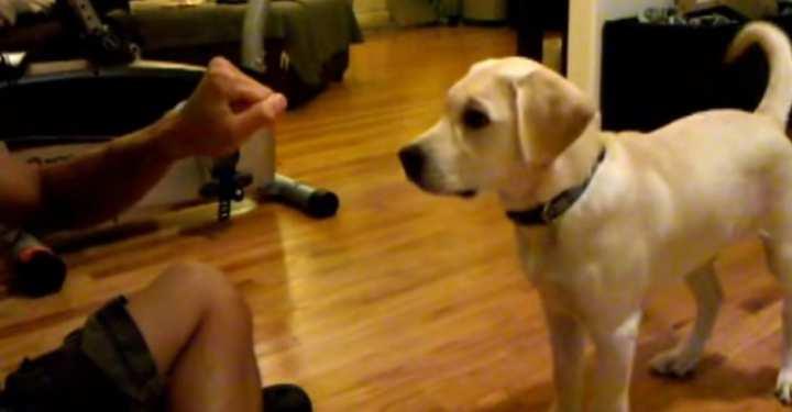 Αυτό το σκυλάκι ξέρει κόλπα! (ΒΙΝΤΕΟ)