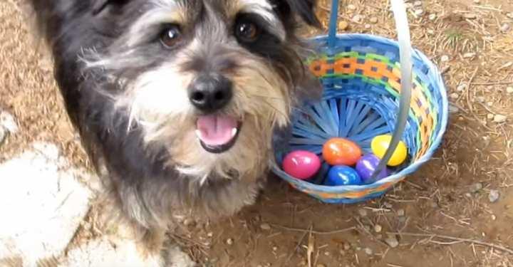 Πάσχα: «Κυνήγι» αυγού με παιδιά... και σκυλιά! (ΒΙΝΤΕΟ)