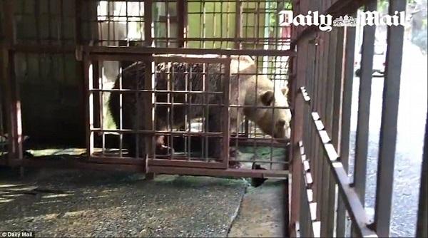 φυλακισμένα ζώα αρκούδα